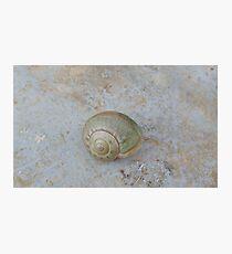 green slug Photographic Print