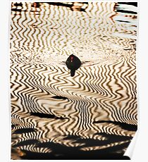 Moorhen and Corrugation Poster