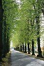 Lime Avenue by John Keates