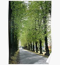 Lime Avenue Poster