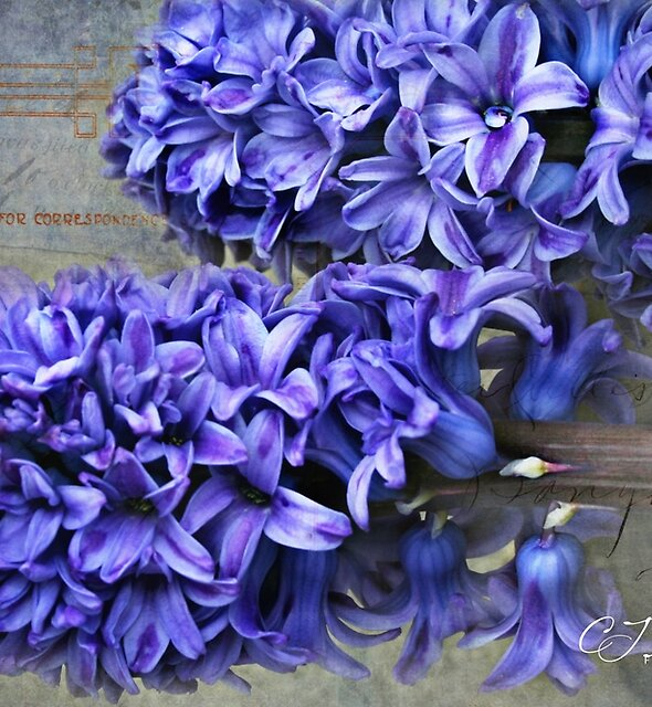 Spring Perfume by CJ Anderson