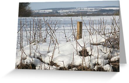 North Dorset snow scene by naturalimages