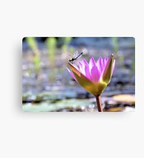 Lounging On A Lilly Canvas Print