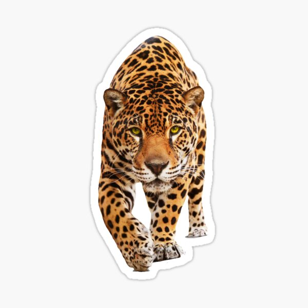 Jaguar sticker Sticker