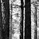 Stripes by HeavenOnEarth