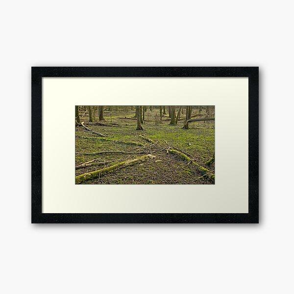 Manny fallen tree trunks on the winter forest floor Framed Art Print