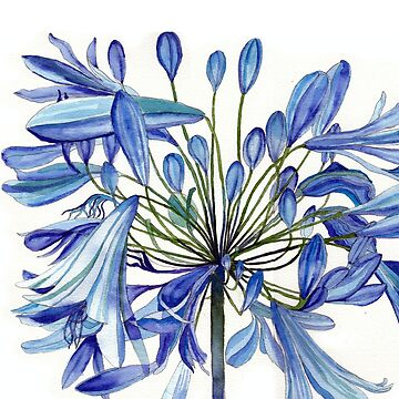 Agapanthus Flower Painting by esvb