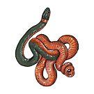 Snake by Sami Bayly