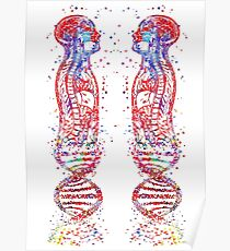 DNA man, human body anatomy, human body molecules Poster