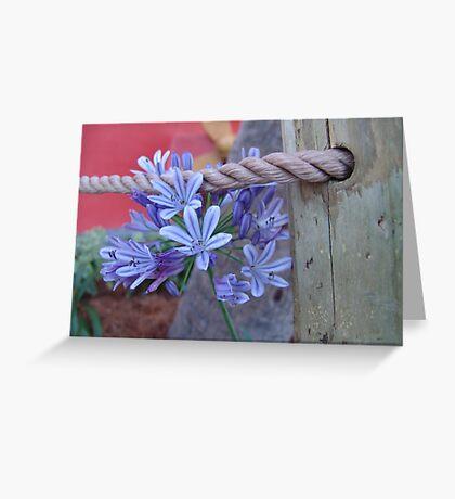 Agapanthus Greeting Card
