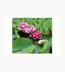 Waterlilies and Parrot Feather Art Print
