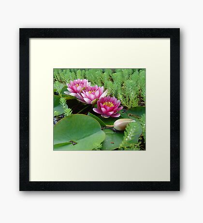 Waterlilies and Parrot Feather Framed Print