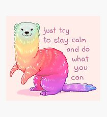 """Just Try to Stay Calm"" Rainbow Ferret Photographic Print"