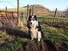 Farmland Laddie by Michael Haslam