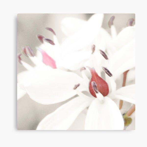 Pastel Milkmaids Canvas Print