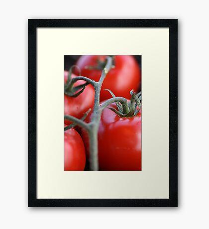 On the Vine. Framed Print