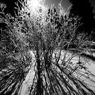 Frost by Josh Dayton