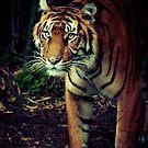 Tiger Tiger by Natalie Manuel