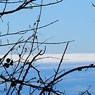 Horizon by karenlynda