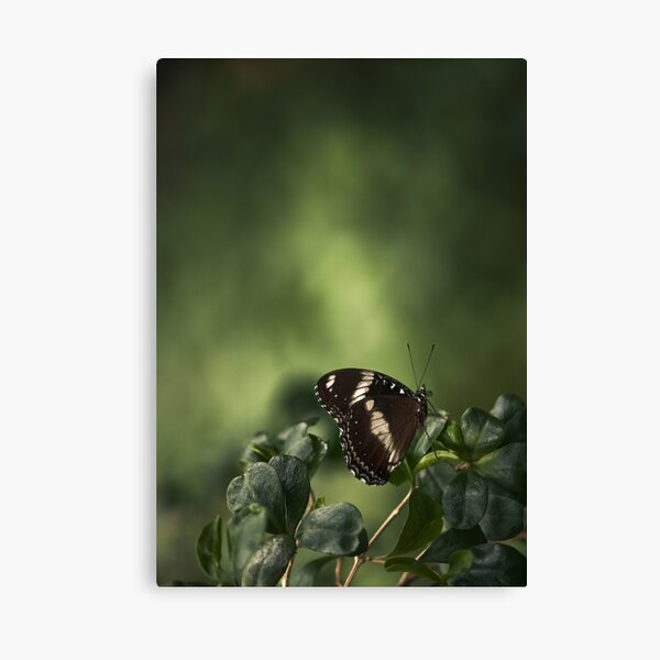 Muted Canvas Print
