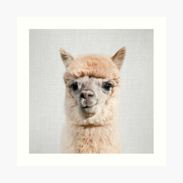 Alpaca - Colorful Art Print