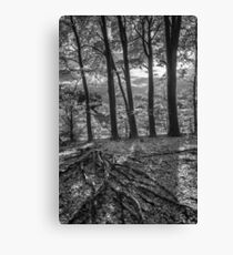 King's Forest Autumn #3 Canvas Print