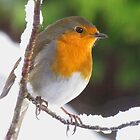 Robin in the snow by jacqi