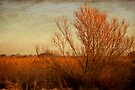 Orange winter by Anne Staub