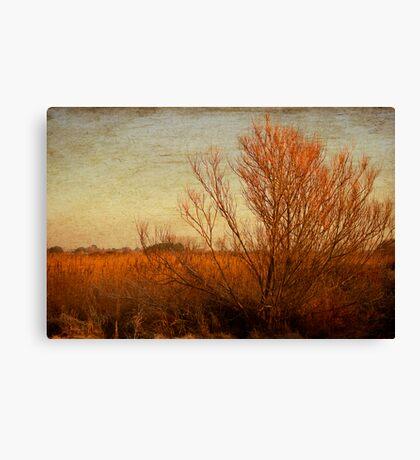 Orange winter Canvas Print