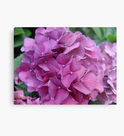 Violet Hydrangeas Metal Print