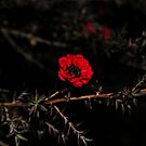 Alone in the darkness... by HeavenOnEarth