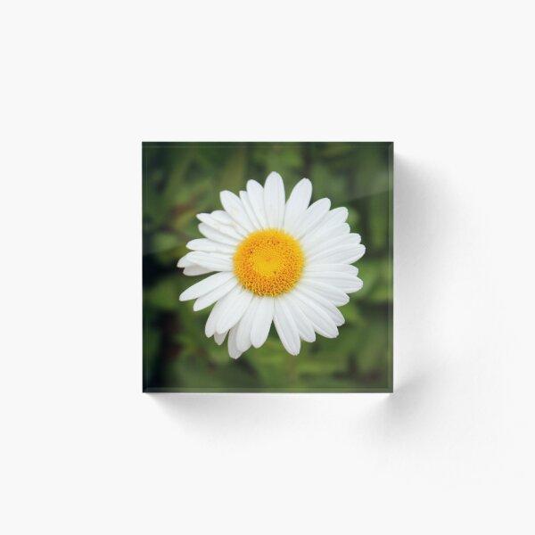 One White Daisy Acrylic Block
