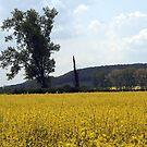 Yellow Sea #2 by hynek