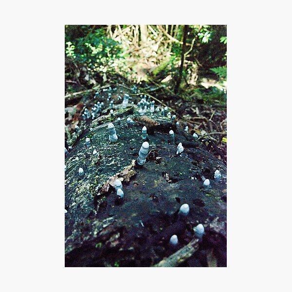 Dead Man's Fingers Fungi, Lamington National Park, Qld, Australia Photographic Print