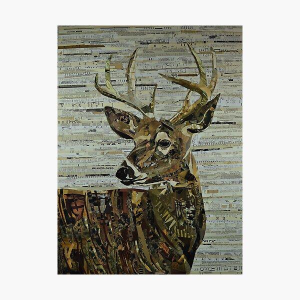 Whitetail Deer Collage Art Unique Photographic Print