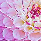 Dahlia Blooming Raindrops by Chrissy Ferguson