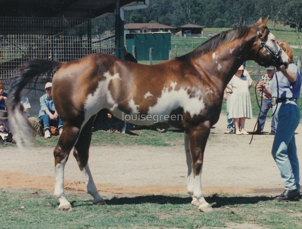 "APHA World Champion - ""Just Shameless"" (Sept 1997) by louisegreen"