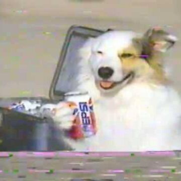 aesthetic doggo vaporwave theme cool and good does a hold of pepsi can by youstiffbrah
