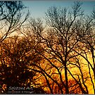 Winter Sunset by solstone