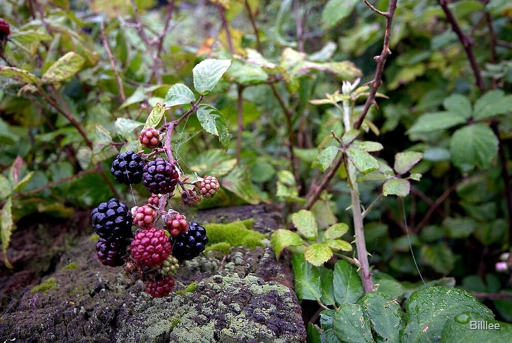 Blackberry Morning. by Billlee