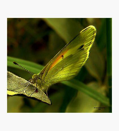 MELLO-YELLOW Photographic Print