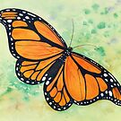 Wanderer (Monarch) Butterfly Watercolour Painting by Heatherian