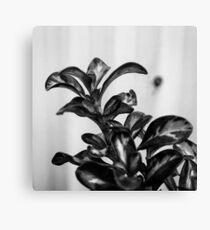 Black and White Plant Canvas Print