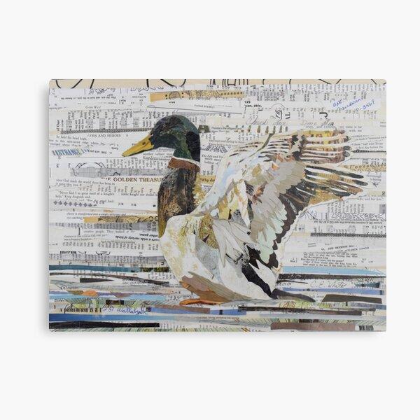 Mallard Duck Collage Art CE White Art Metal Print