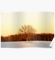 The Tree of Light Poster
