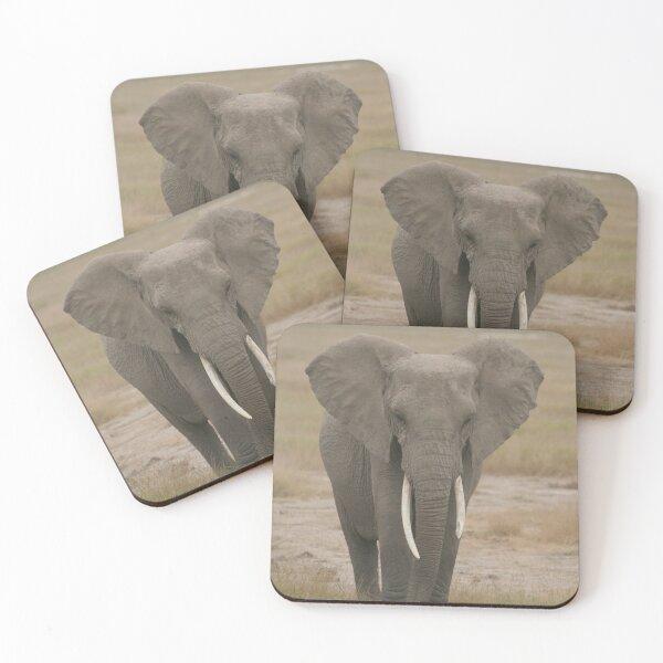 All Ears Elephant  Coasters (Set of 4)