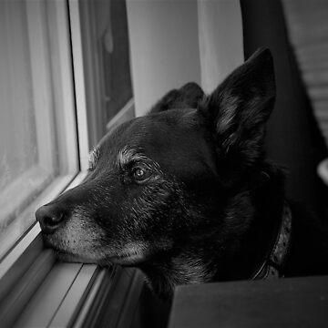 black dog by mtjh