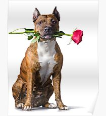 Strength and tenderness (The Loving Pit Bull) Poster