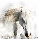 White Stallion by Mark Salmon