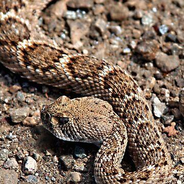 Rattlesnake near Joshua Tree entrance by Lines
